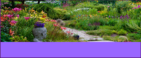 Enter the Great Local Gardens Contest! Sponsored by the Shaler Garden Club and SNHL.  All types of gardens will be considered in this casual, fun, contest.  Winners will be announced...