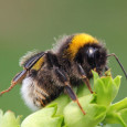It's common knowledge that bees are a vital part to our food and ecosystem and in 2016 seven species of bees were placed on the endangered species list. Local resident […]