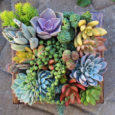 "Looking for a ""green activity"" after this winter? Come join us this evening to create your own succulent container garden.  A great night out with friends and family or date […]"
