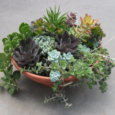 "Looking for a ""green activity"" after this winter? Come join us this evening to create your own succulent container garden. A great night out with friends or family! Maybe a date night? […]"
