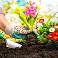 Spring into action and enterthe 2021 Great Local Gardens Contest! Sponsored by the Shaler Garden Club–celebrating 100 years–and Shaler North Hills Library. Don't hide your beautiful garden behind a fence.All […]